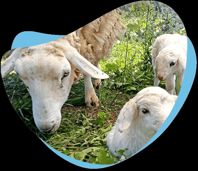 Kmetija V PRAVLJICI, pomagamo 70+ rešenim živalim. Zbiramo donacije.